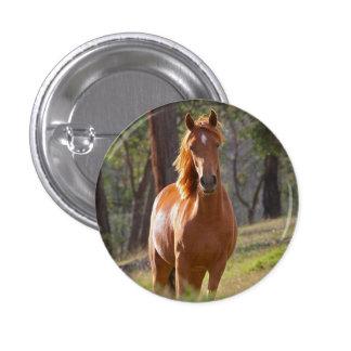 Beautiful chestnut horse photo portrait, gift pinback button