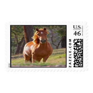 Beautiful chestnut horse photo portrait postage