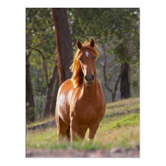 Beautiful chestnut horse photo portrait postcard