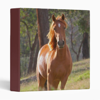 Beautiful chestnut horse portrait photo album vinyl binder