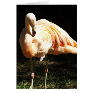 Beautiful Chilean Flamingos on One Leg in Shadow Card