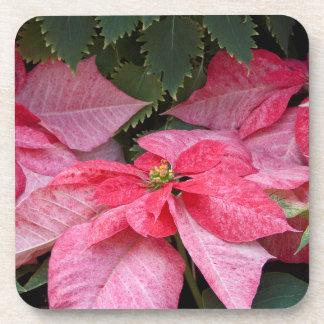 Beautiful Christmas Poinsettia Photo Beverage Coaster