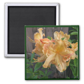 Beautiful Close-up of Daylilly 2 Inch Square Magnet