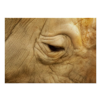 Beautiful close-up photo of a rhinoceros eye… poster