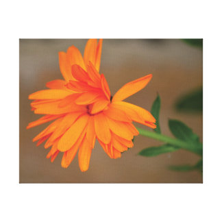 Beautiful close-up photo orange flower petals canvas print