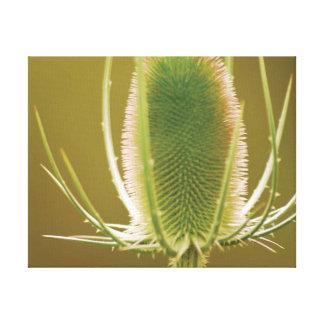 Beautiful close-up photo teasel canvas print