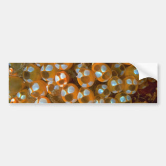 Beautiful Cluster of tunicates adorning a reef Car Bumper Sticker