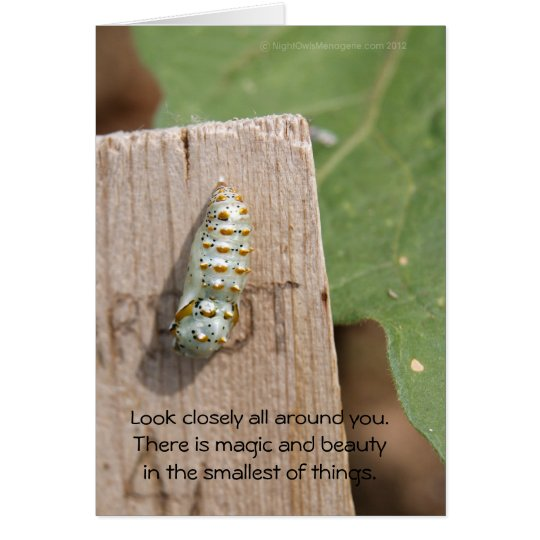 Beautiful Cocoon Card
