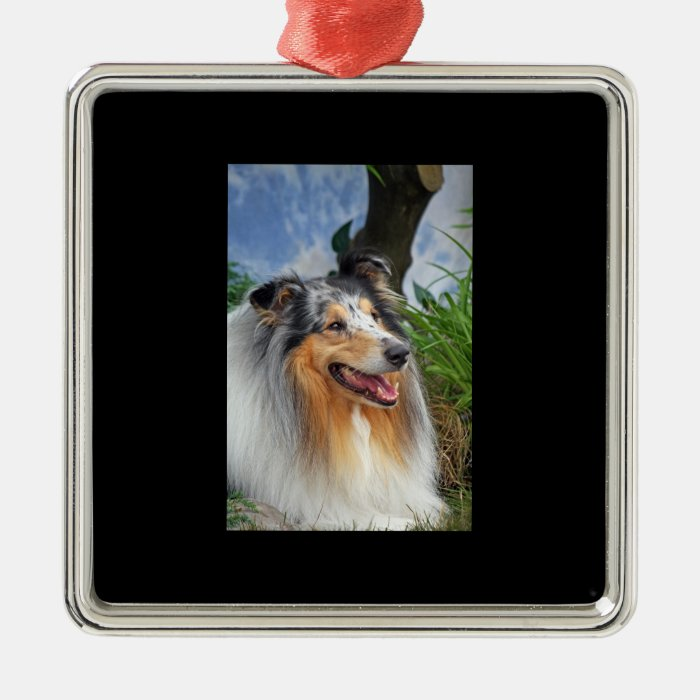 Beautiful Collie dog blue merle ornament, gift Metal Ornament