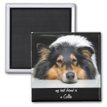 Beautiful Collie dog nose tri color magnet, gift 2 Inch Square Magnet