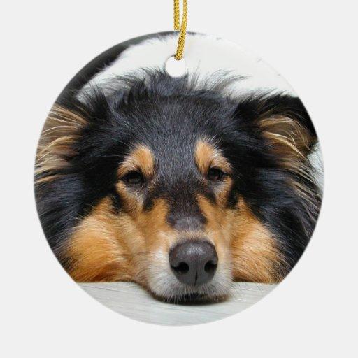 Beautiful Collie dog nose tri color  ornament