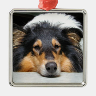 Beautiful Collie dog nose tri color ornament, gift Square Metal Christmas Ornament