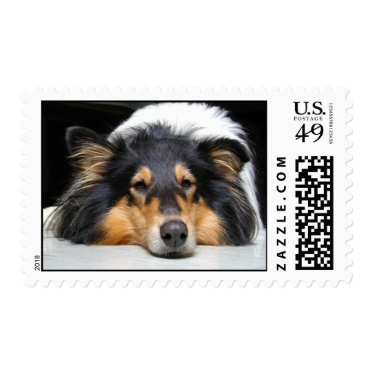 Beautiful Collie dog nose tri color postage stamp