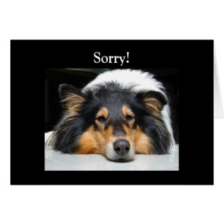 Beautiful Collie dog nose tri color  sorry card Greeting Card
