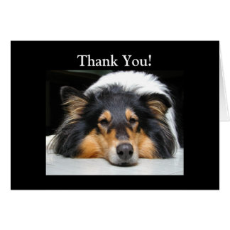 Beautiful Collie dog nose tri color thank you card