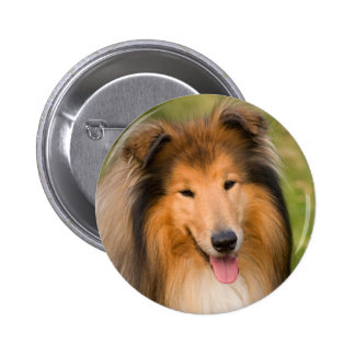 Beautiful Collie dog portrait button, gift idea Button