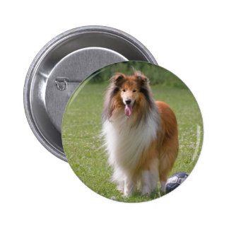 Beautiful Collie dog portrait button, gift idea Pinback Button