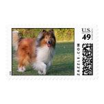 Beautiful Collie dog portrait postage stamp