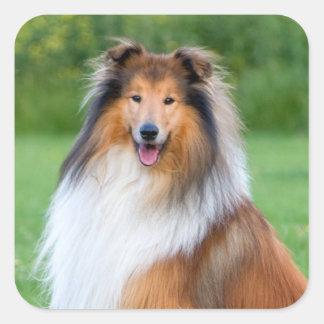 Beautiful Collie dog portrait sticker, gift idea