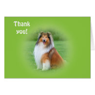 Beautiful Collie dog thank you card