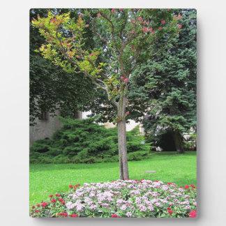 Beautiful colored garden. Summertime. Plaque