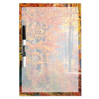 Beautiful colorful autumn fall forest sunbeams Dry-Erase board