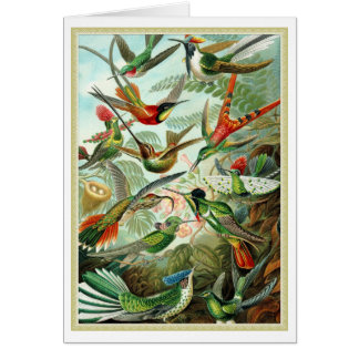 Beautiful colorful birds antique litho plate card