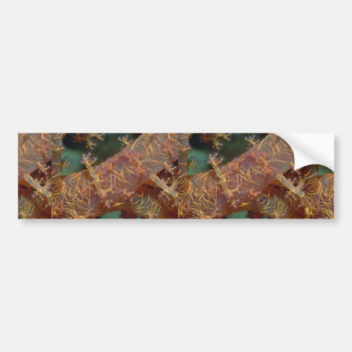 Beautiful Colorful Dondronephthya soft coral Car Bumper Sticker