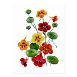 Beautiful Colorful Embroidered Nasturtiums Post Cards