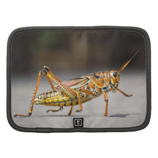Beautiful colorful grasshopper in close-up folio planners
