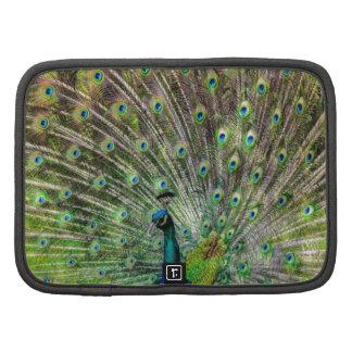Beautiful, colorful peacock organizer