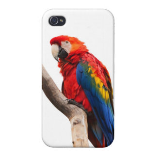 Beautiful Colorful Scarlet Macaw Parrot Bird Cover For iPhone 4