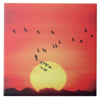 Beautiful colorful sunset with birds flying ceramic tile