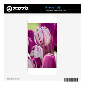 Beautiful colorful tulips at a green garden of Ist iPhone 4 Skins