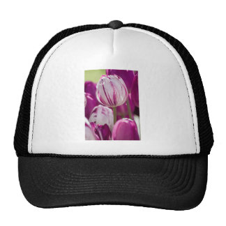 Beautiful colorful tulips at a green garden of Ist Trucker Hat