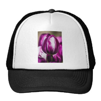 Beautiful colorful tulips at a green garden trucker hat