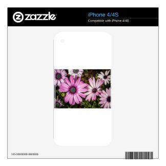 Beautiful colourful African Daisies iPhone 4S Decal