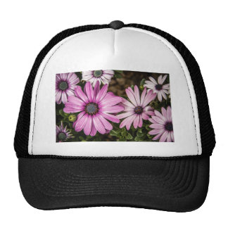Beautiful colourful African Daisies Trucker Hat