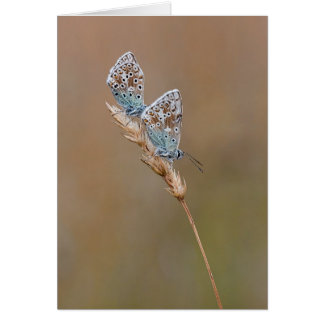 Beautiful Common Blue Butterfly - Greeting Card