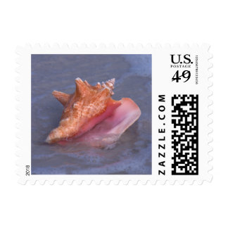 Beautiful Conch Shell Postage