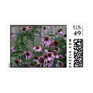 Beautiful Coneflowers in Bloom Postage Stamp