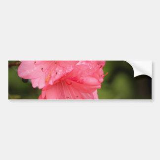 Beautiful Coral Azalea Bumper Sticker