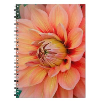 Beautiful Coral Peach Dahlia on Green Background Notebook