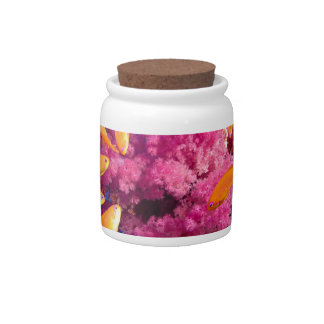 Beautiful Coral Reef Naturescape Candy Jars