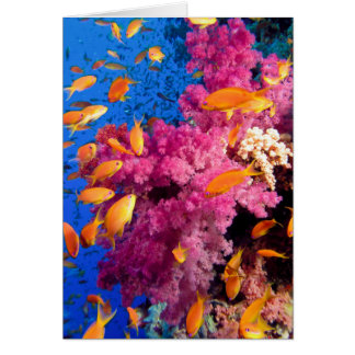 Beautiful Coral Reef Naturescape Card