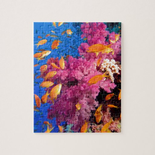 Beautiful Coral Reef Naturescape Jigsaw Puzzle