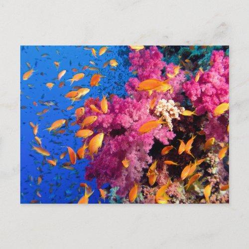Beautiful Coral Reef Naturescape Postcard