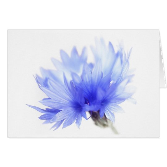 Beautiful cornflower card