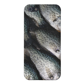 Beautiful Crappie:  Cover For iPhone SE/5/5s