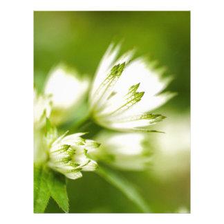 beautiful cream and green bog garden flower letterhead